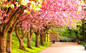spring nature wallpapers on wallpaperplay