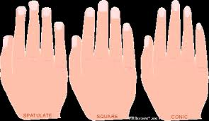 best nails for short fat fingers nail