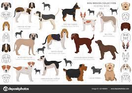 ᐈ Rat terrier silhouette stock cliparts ...