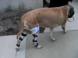 dog knee brace wow aoc pet you