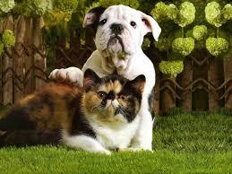 puppy and kitten hd wallpaper