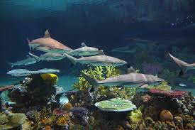 national aquarium s blacktip reef
