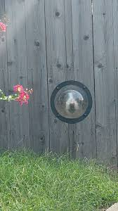 Walked Past A Fence With A Dog Window Aww