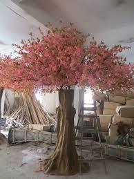plants indoor s ideas