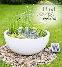h34cm white pond in a pot semi shade