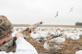 Snow Goose Hunting Without Decoys How To Hunt Snow Goose Hunt Without Decoys Decoypro