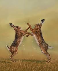 boxing hare wallpaper on wallpapersafari