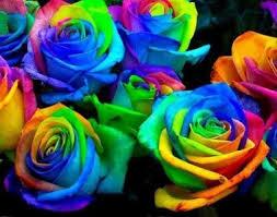 rainbow roses vase arrangement in