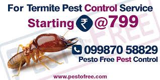 Download White Ants Pest Control  Pics