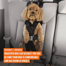 top 5 best dog car seat belts