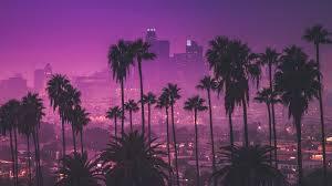palm trees against purple nightlights