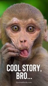 funny monkey memes esbook