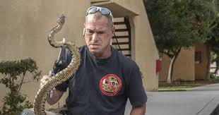 A Busy Year For The People Who Catch Rattlesnakes Los Angeles Times