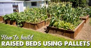 raised garden beds out of pallets