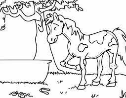 Kleuren Nu Paard In Het Gras Kleurplaten