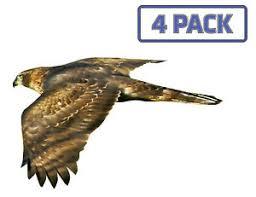 Northern Goshawk Eagle Hawk Birds Of Prey Sticker Vinyl Decal 1 015 Ebay