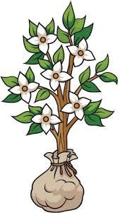 Small Dogwood Tree A Creative For Kids
