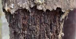 Wood Preservation Wikipedia