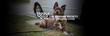 one car helps the humane society of the