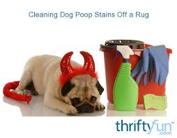 cleaning dog stains off a rug
