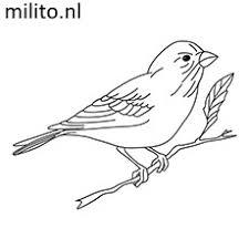 Kleurplaat Vogel De Mooiste Kleurplaten Milito Nl
