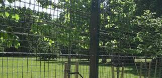 Corrie Black Welded Mesh Fencing