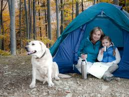 The Best Portable Camping Fences For Dogs Camping Cubs