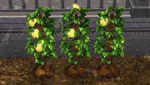 the sims 3 life fruit info