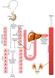 Dietary Polyphenols Targeting Arterial Stiffness: Interplay of ...
