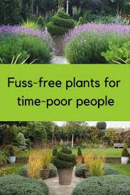 brilliant low maintenance plants for