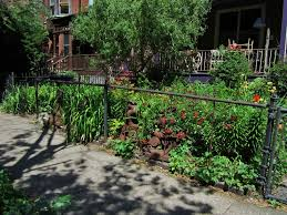 Chain Link Trellis Beautify A Chain Link Fence Paint It Black Or Partly Dismantle It