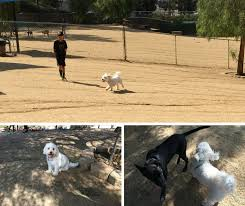 The Best Off Leash Dog Parks In And Around Los Angeles Momsla
