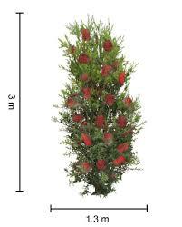 Bottlebrush Callistemon Trees Plants Flowers 2018 Growers Guide