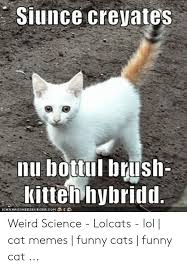 cat memes funny cats funny cat