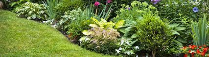 soil for raised garden beds