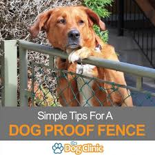 how to dog proof a fence prevent