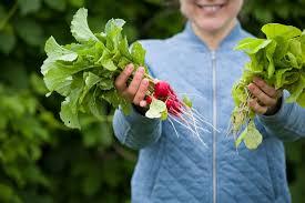 10 best garden crops for beginners