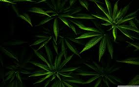 hd weed widescreen 1080p wallpapers