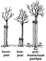 Afbeeldingsresultaat voor kniepalen boom band