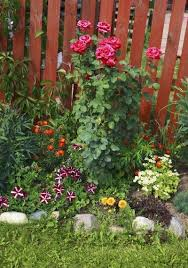 tips for growing plants under rose