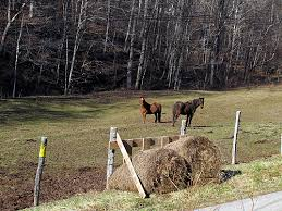 Fence Line Feeders Round Bales And Stars Chickens In The Road