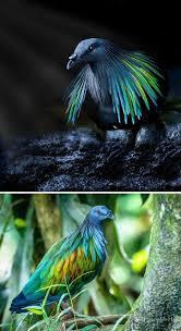34 حمام ا مهيب ا يثبت أن هذه الطيور تأتي بألوان أكثر من الأبيض