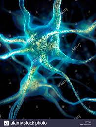 Las células cerebrales neuronas conexiones neuronales conceptual ...