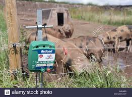 Pig Farming Close Up Of Electric Fence Control Box With Oxford Sandy Stock Photo Alamy