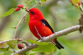 صور عصافير جميلة اروع واجمل اشكال العصافير حلوه خيال