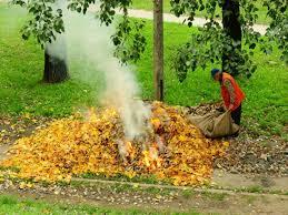 Спалювання листя – небезпека для здоров'я людини та велика шкода ...