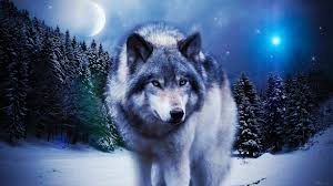 wolf wallpapers 80 pictures