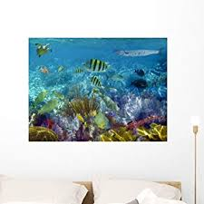 Amazon Com Wallmonkeys Caribbean Reef Tropical Fishes Underwater Wall Decal Peel And Stick Graphic Wm325851 36 In W X 27 In H Home Kitchen