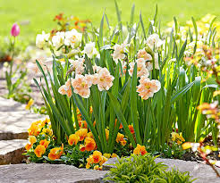 designing with spring bulbs better