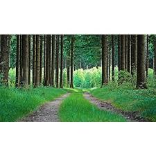 woodland trees nature 3d wallpaper